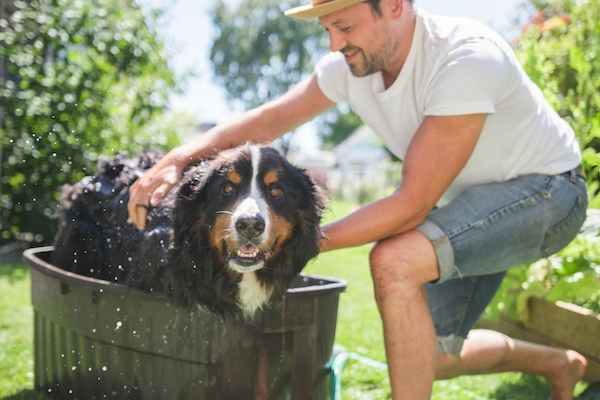 pest control tips 3 – washing your pets