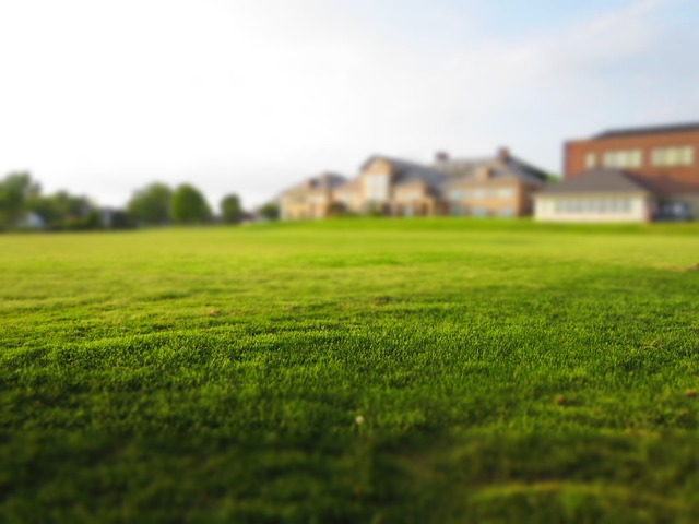 lawn with house in background